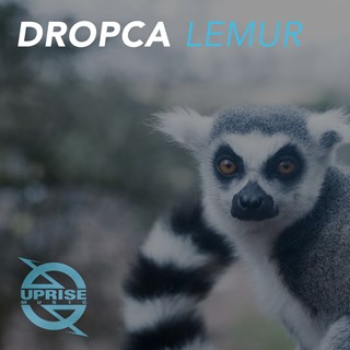 Lemur by Dropca Download